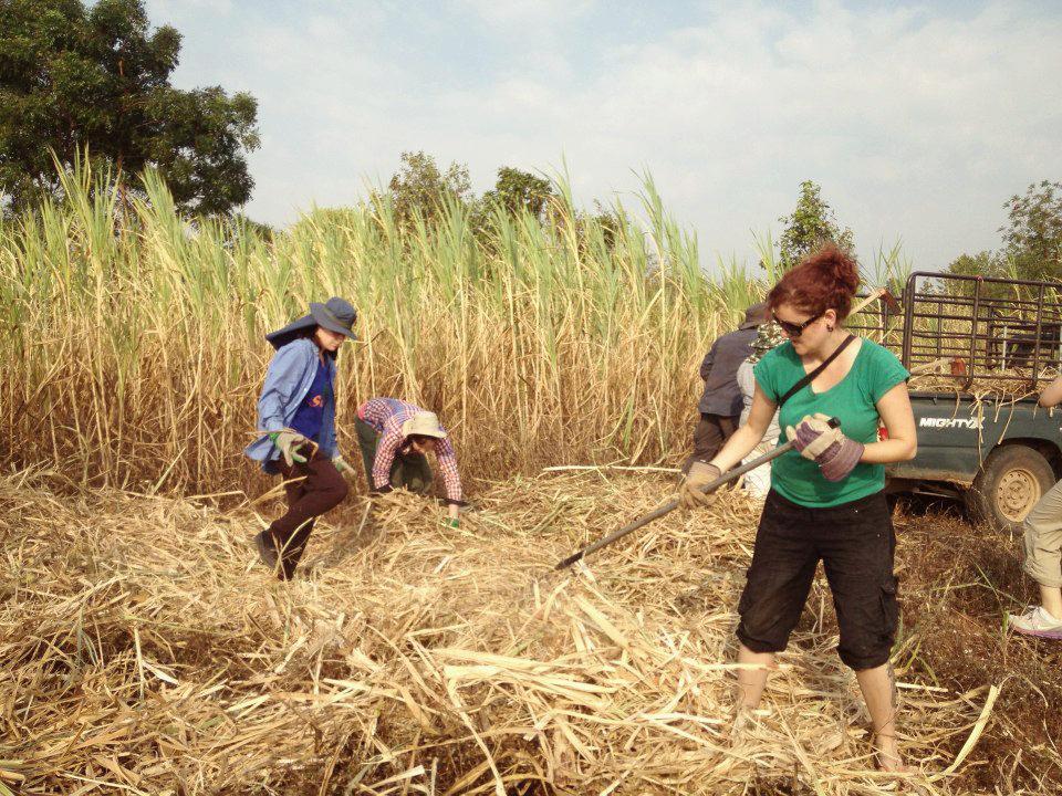 Volunteer in Thailand - Mar Gone Wild