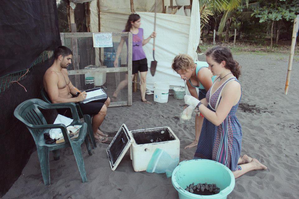 How To Volunteer In Wildlife Conservation - Mar Gone Wild