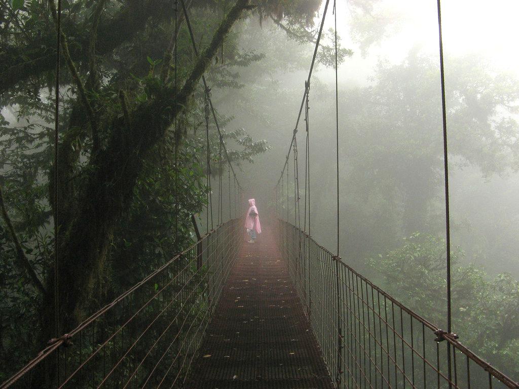 Jungle bridge in Monteverde Cloud Forest Reserve Costa Rica