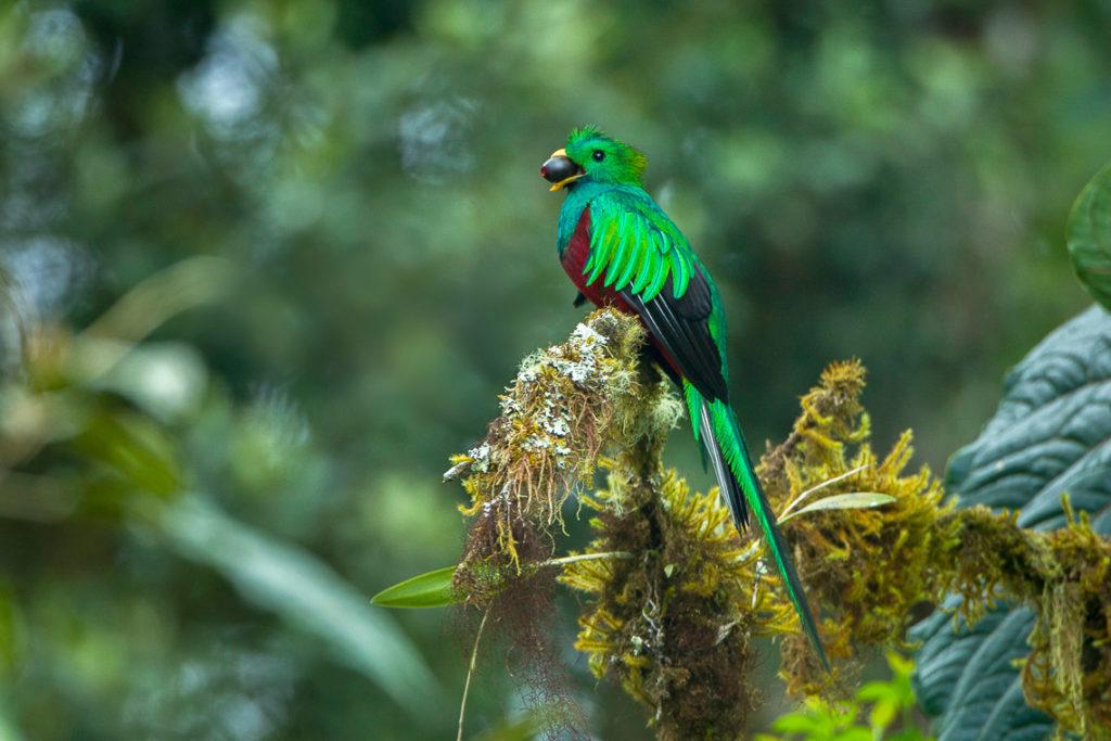 Birding in Costa Rica's Monteverde Cloud Forest - Mar Gone Wild