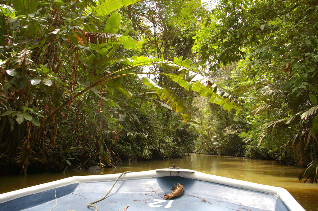 Tortuguero National Park Canal Tour in Costa Rica