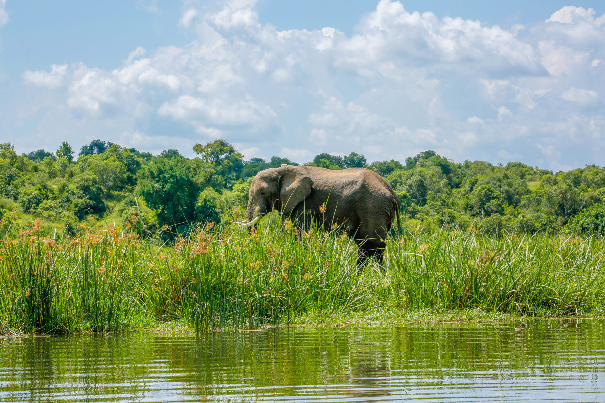 Top Things To Do in Uganda - Go on a Nile River Boat Safari in Murchison Falls National Park