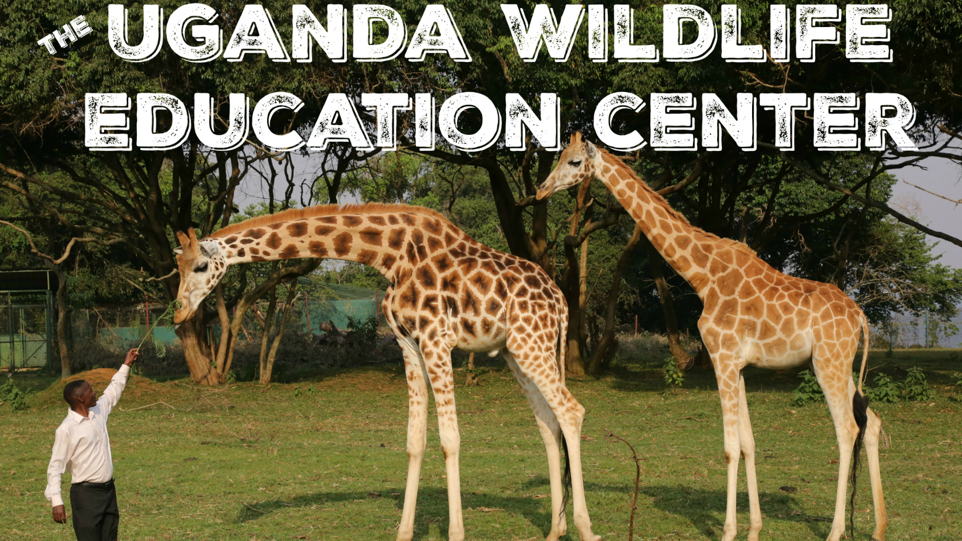 Uganda Wildlife Education Center Film