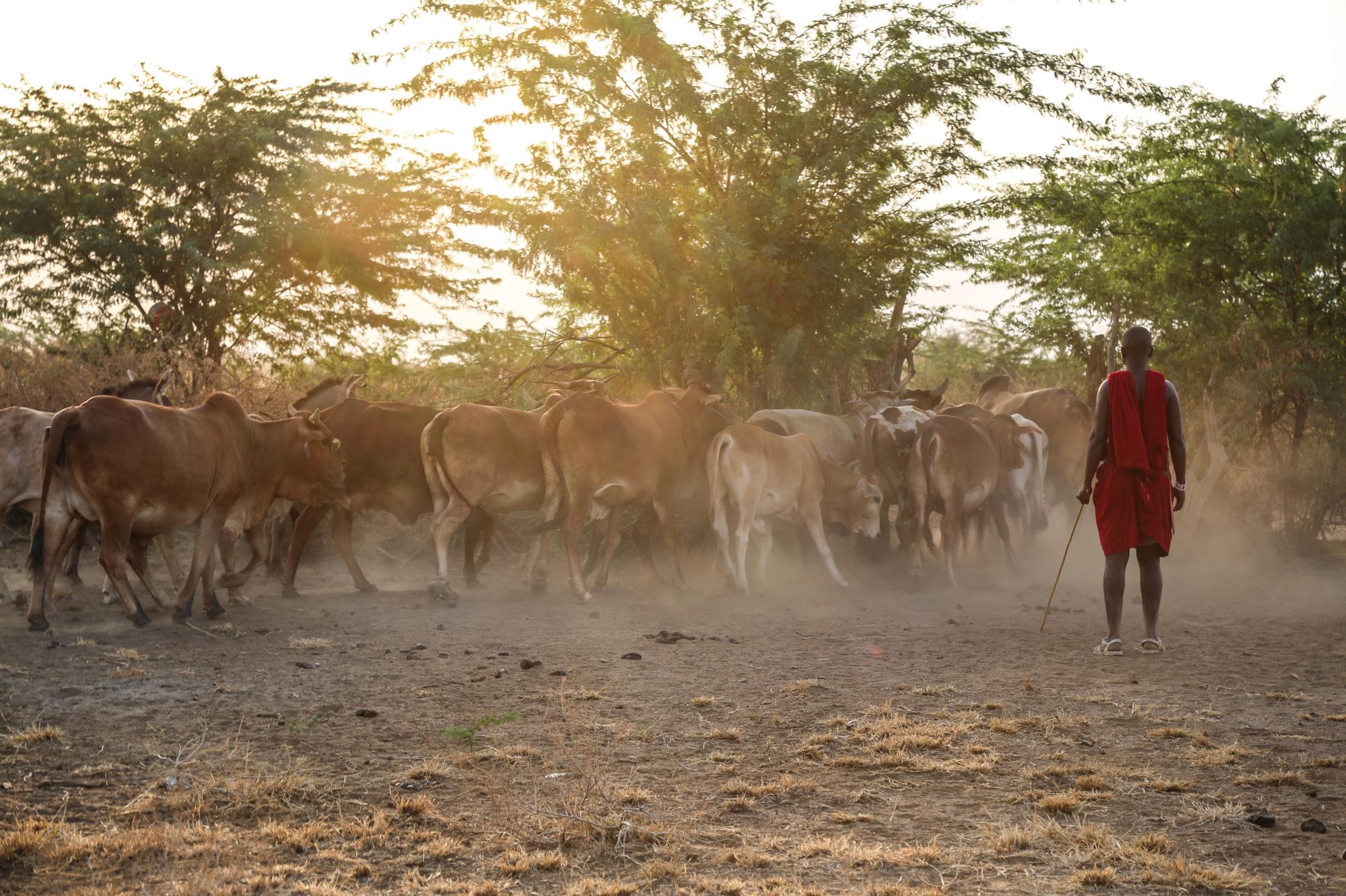 Kenya Conservation blog - Mar Gone Wild