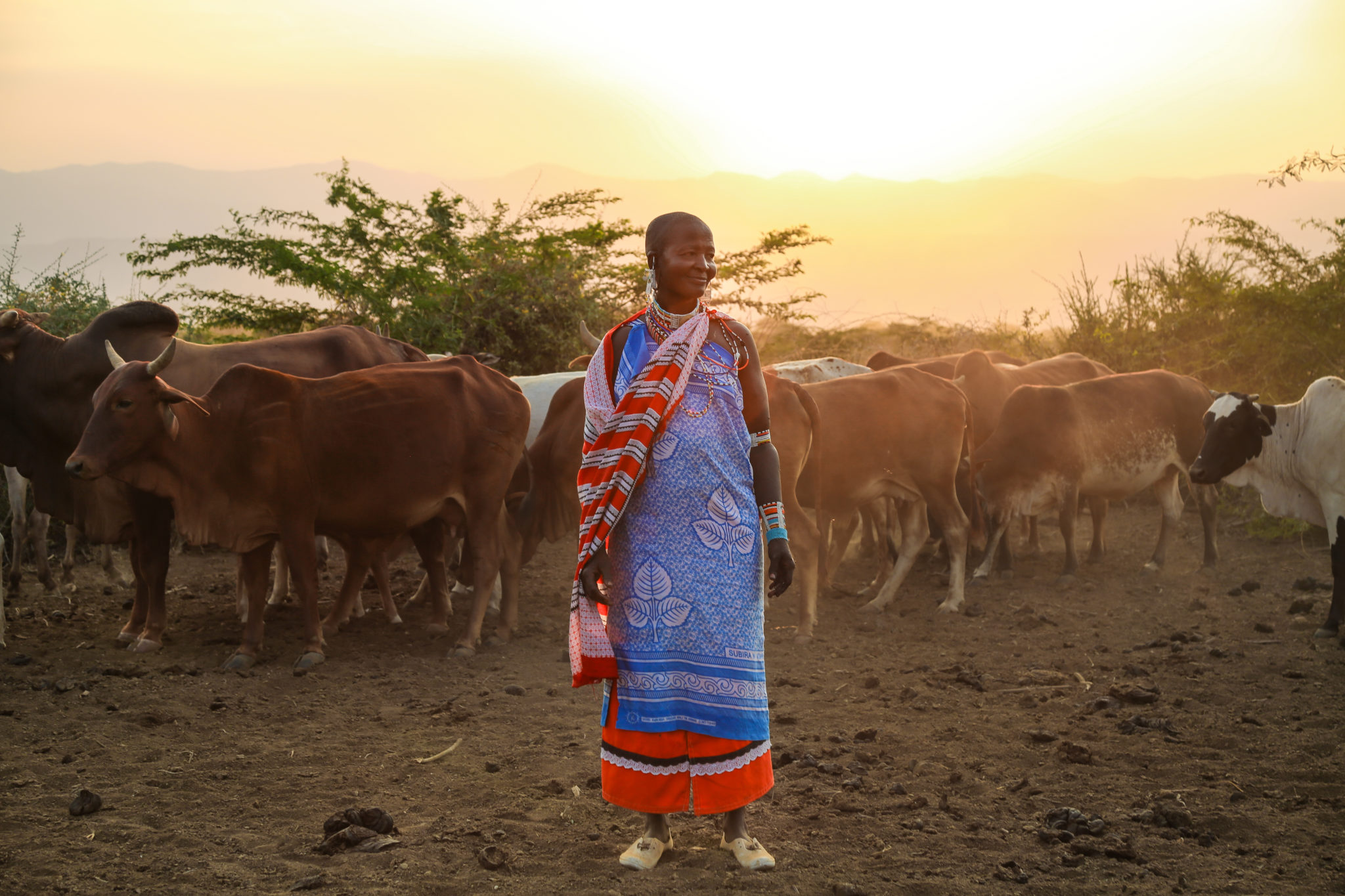 Maasai Woman At sunset With Her Cows - Mar Gone Wild