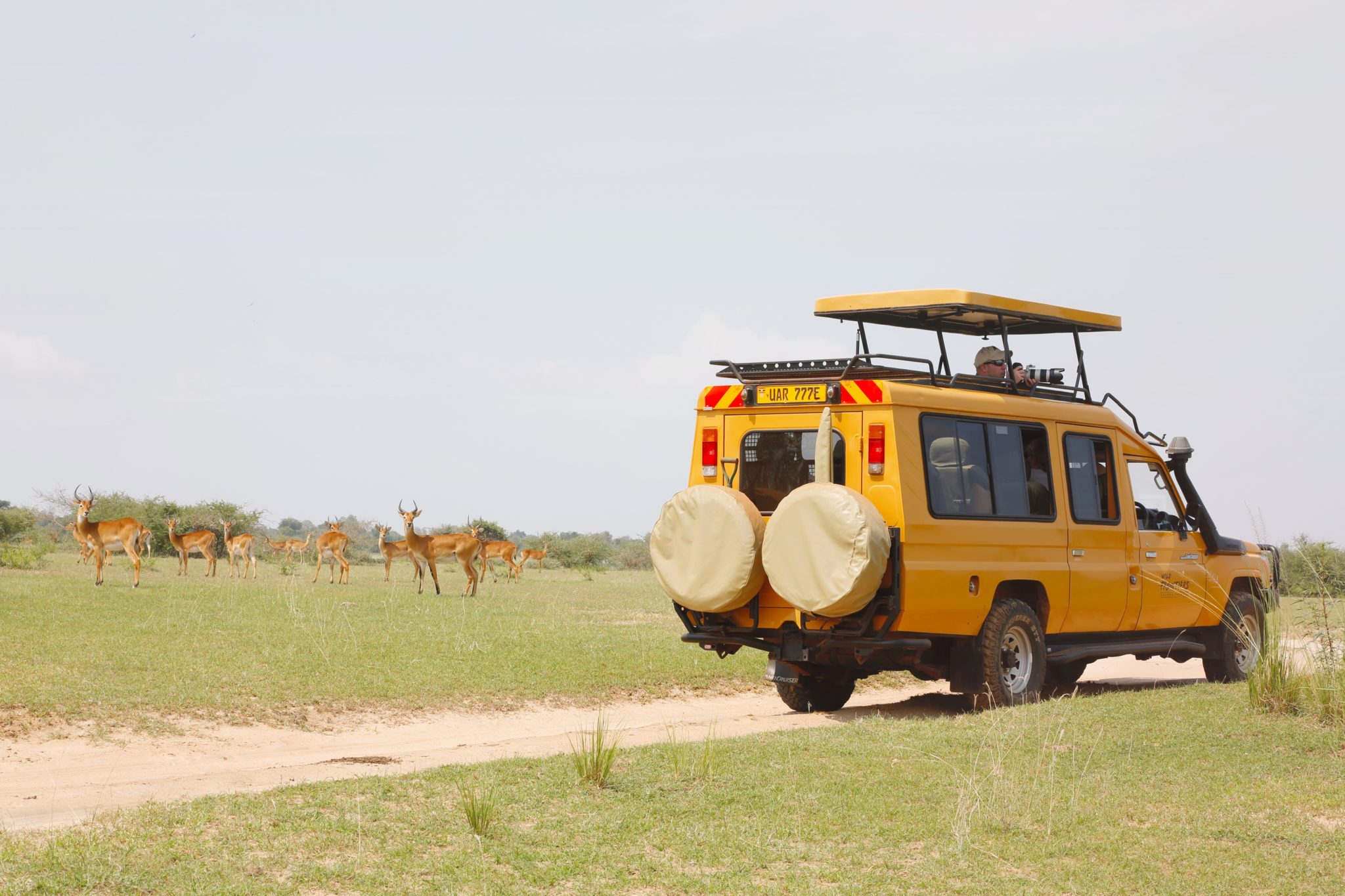 Where to go safari in Africa