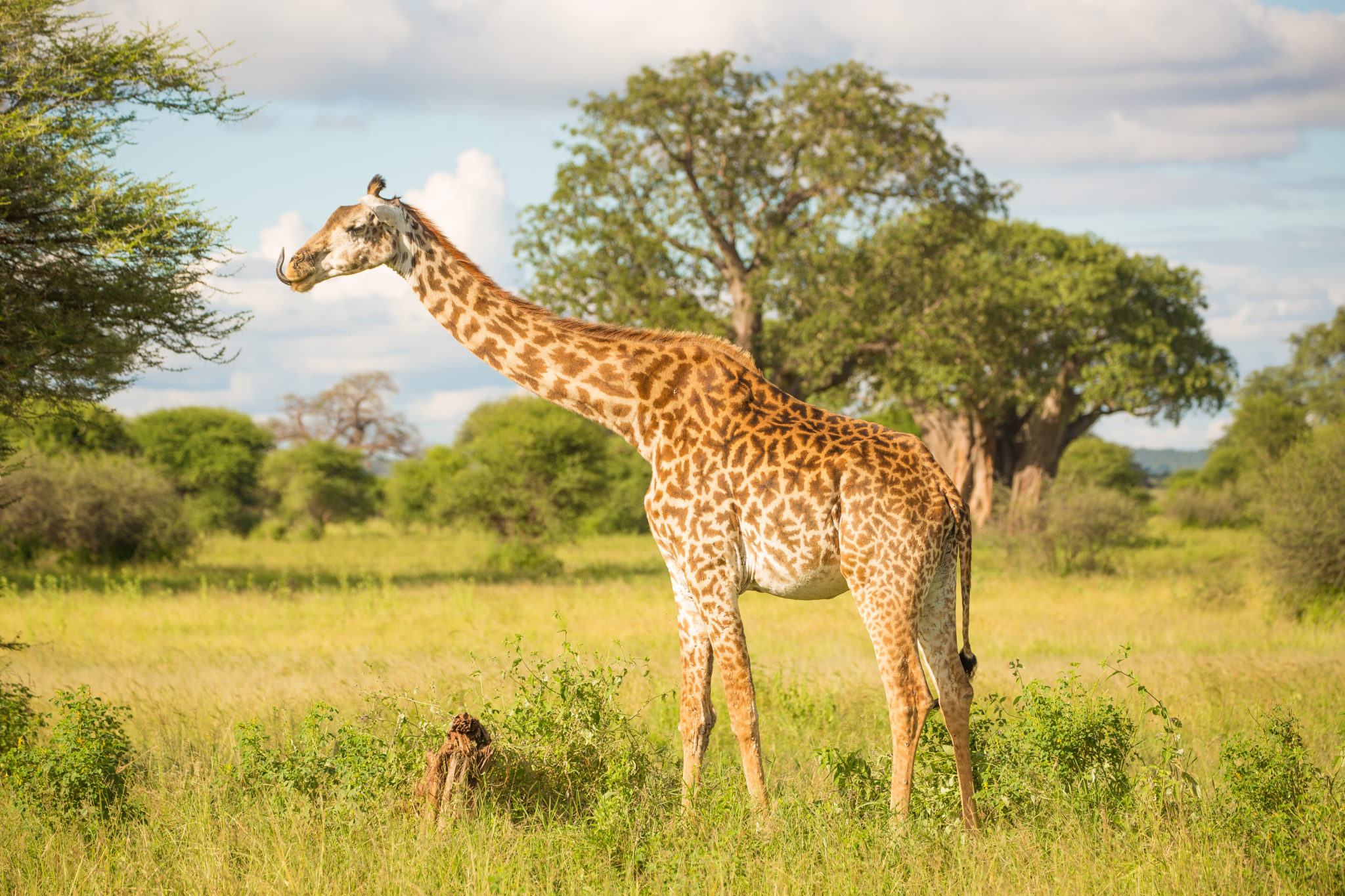 Top Tanzania safari destination