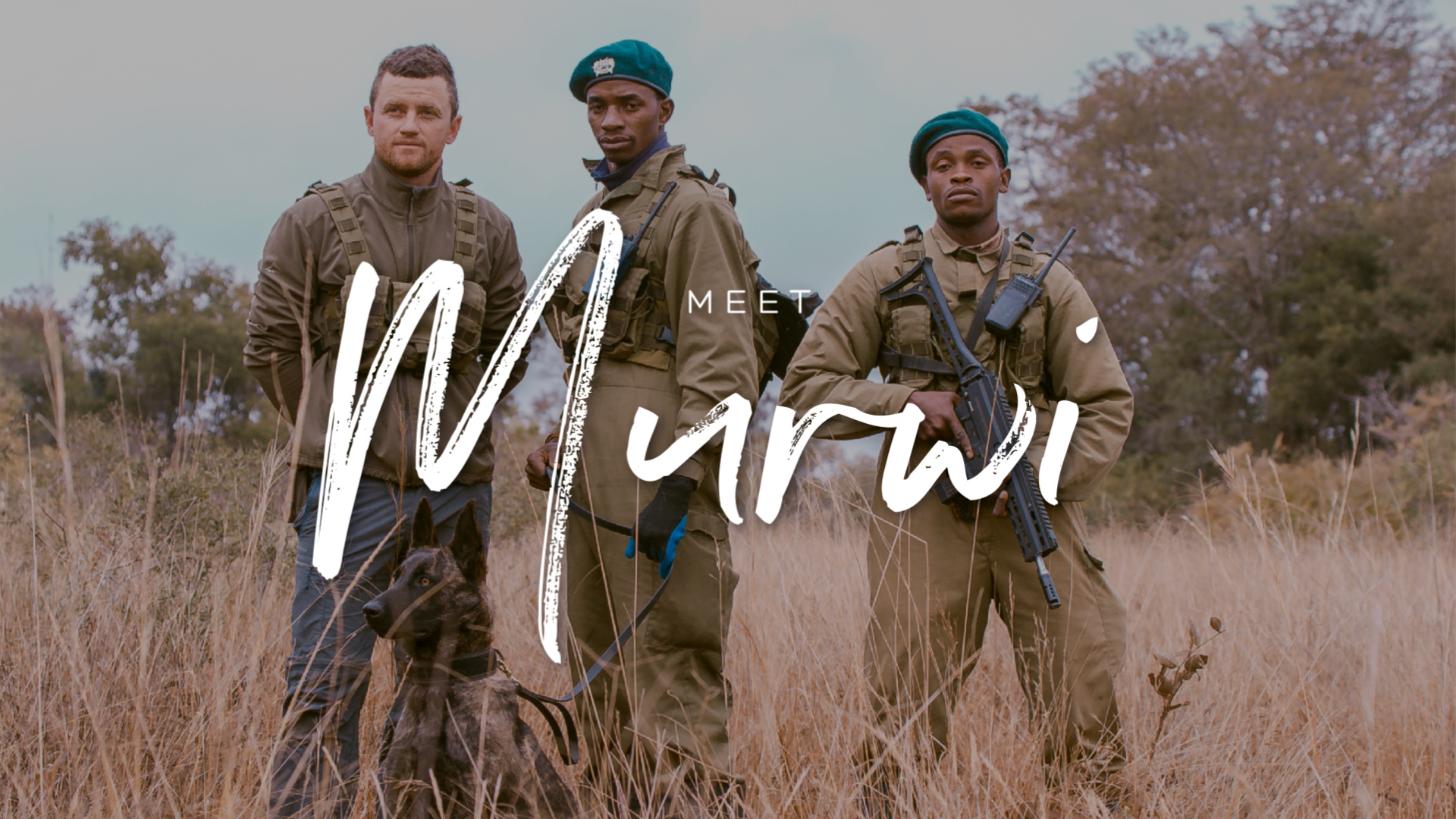 MEET MURWI THE ANTI-POACHING DOG
