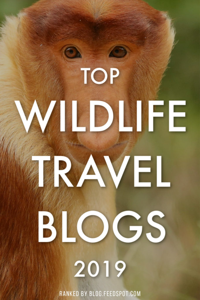 Top Wildlife Travel Blogs 2019