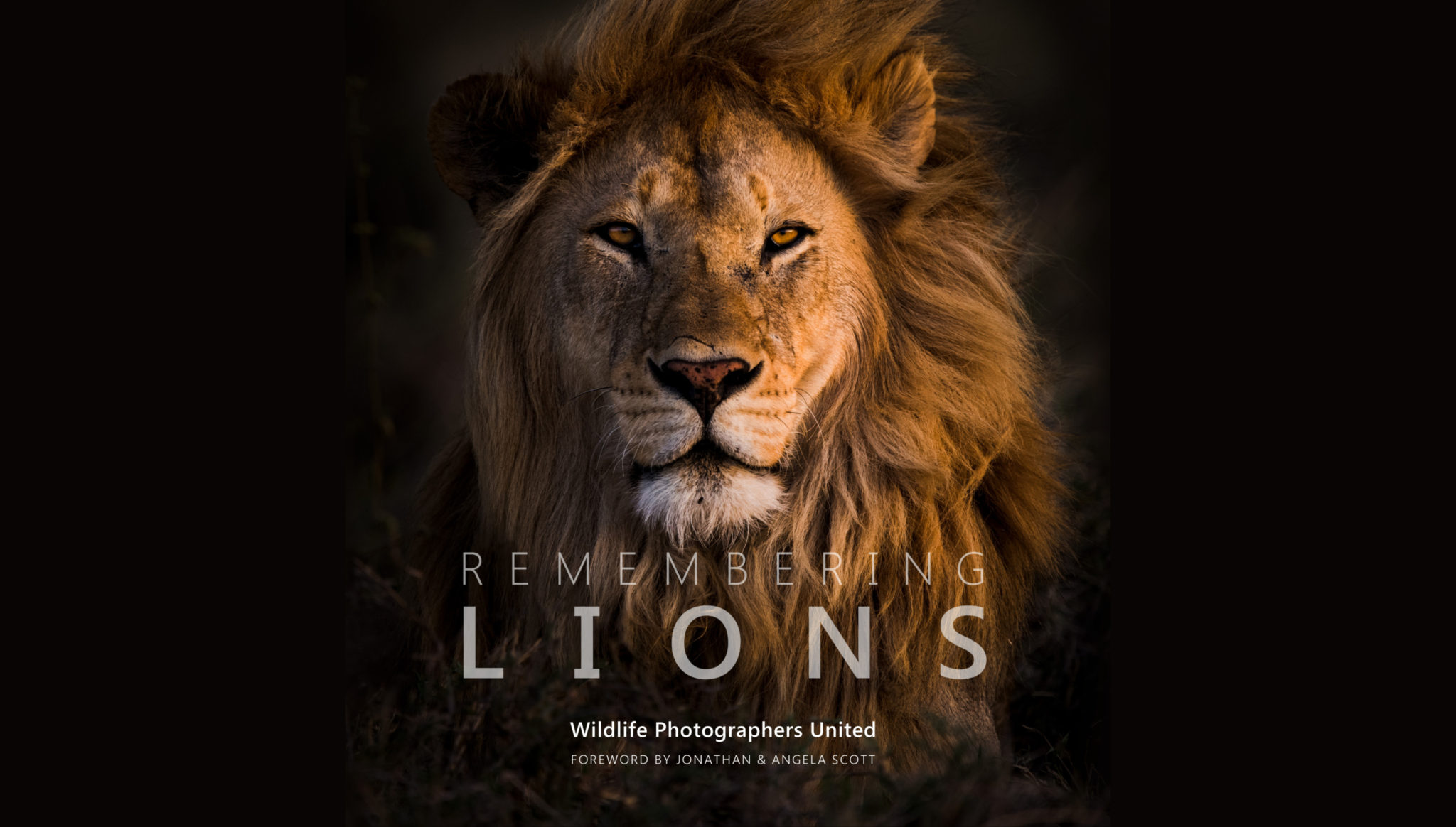 Remembering Lions charity book for conservation. | Mar Gone Wild