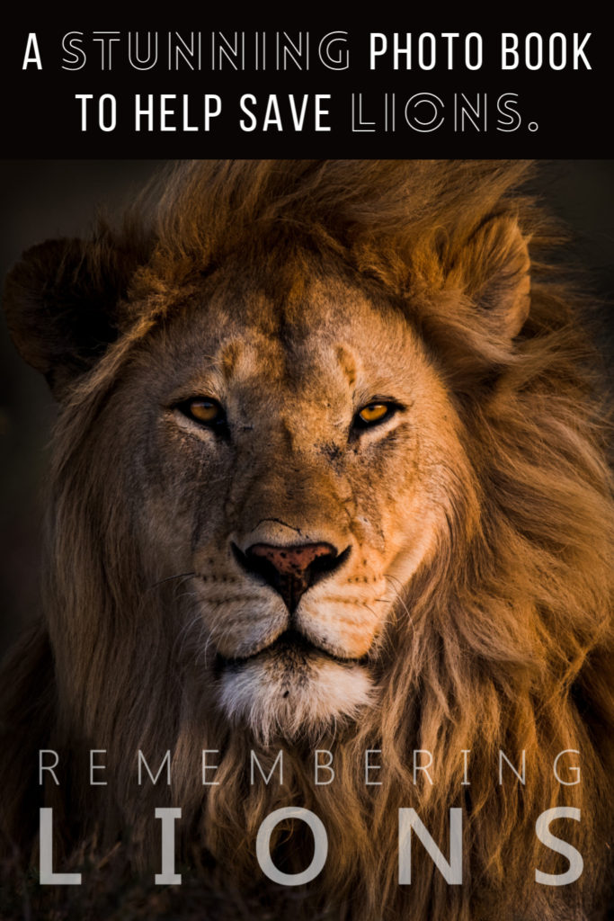 Remembering Lions charity photo book for conservation. | Mar Gone Wild