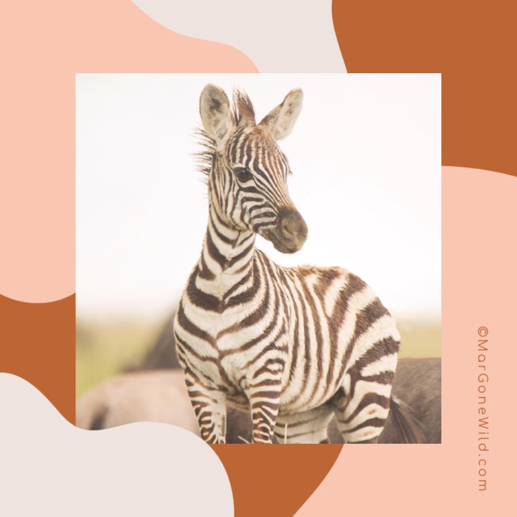 Wildlife Safari Tips - Mar Gone Wild (