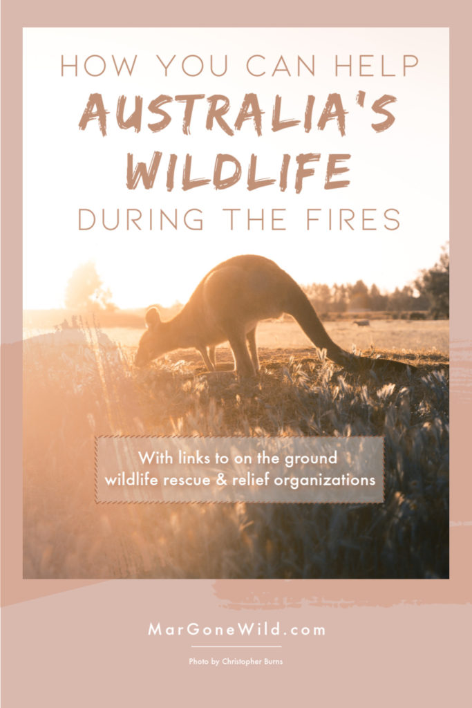 How to Help Australia's Wildlife During the Fires